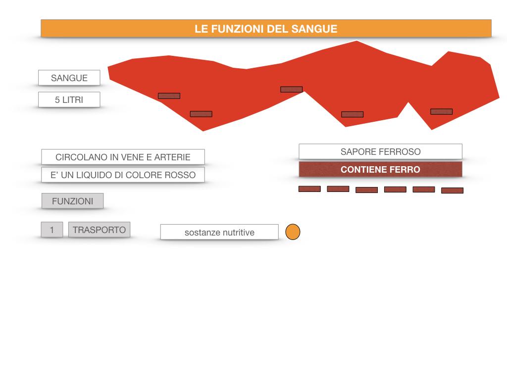 13. CIRCOLAZIONE E DIFESE_SIMULAZIONE.047