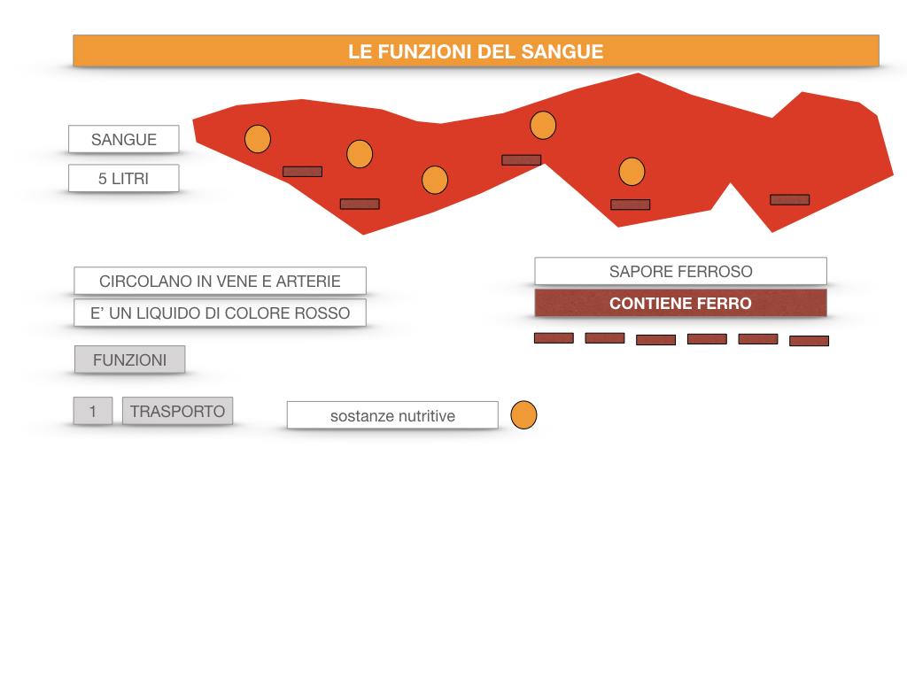 13. CIRCOLAZIONE E DIFESE_SIMULAZIONE.048