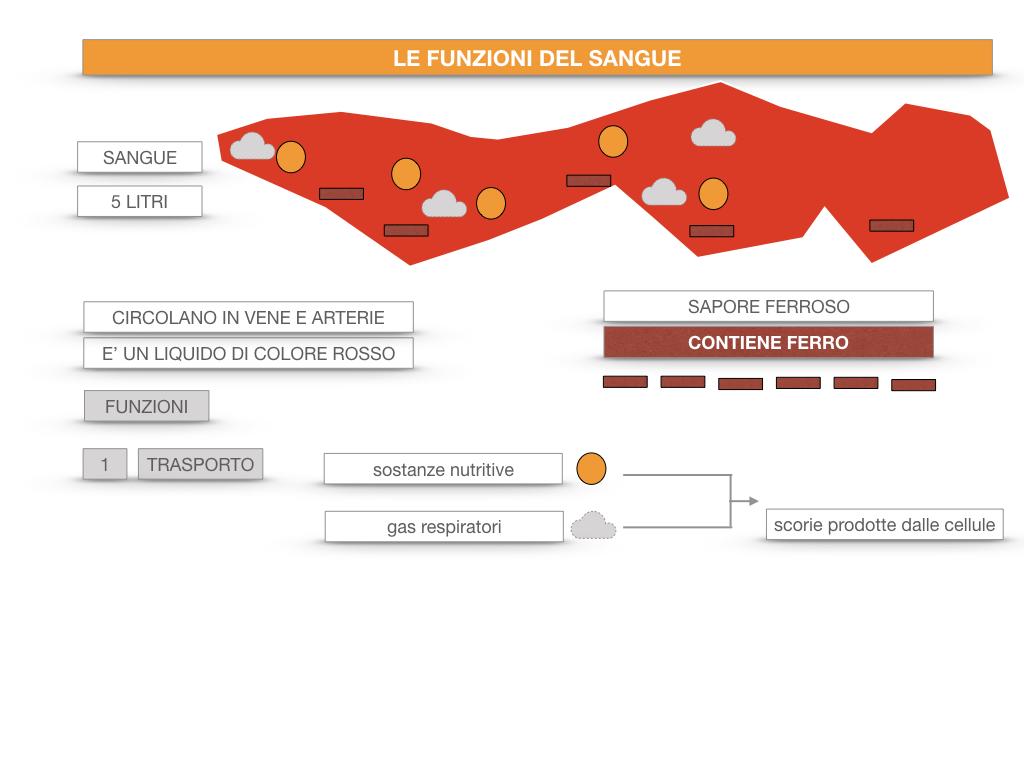 13. CIRCOLAZIONE E DIFESE_SIMULAZIONE.051