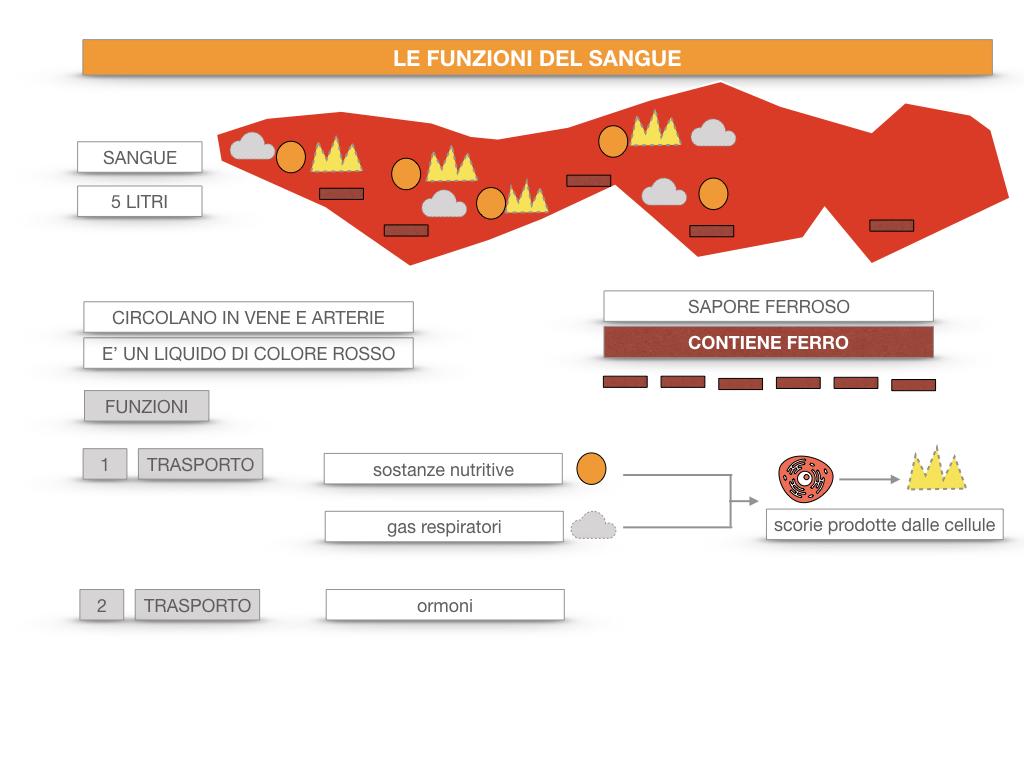 13. CIRCOLAZIONE E DIFESE_SIMULAZIONE.055