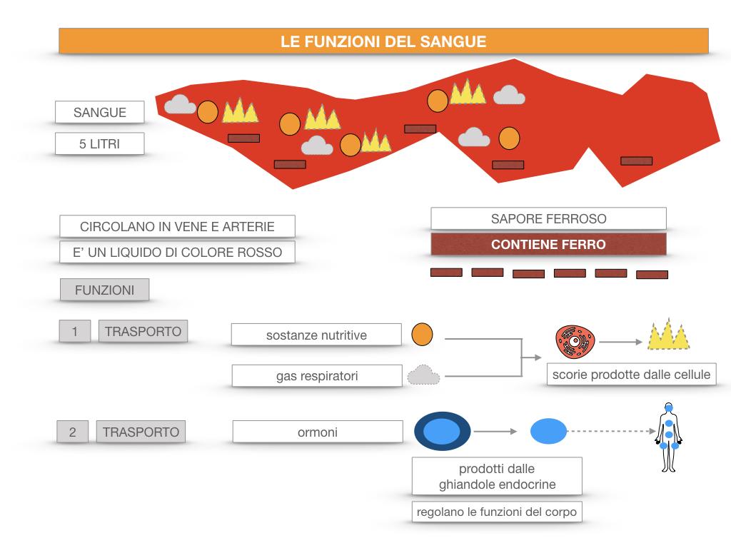 13. CIRCOLAZIONE E DIFESE_SIMULAZIONE.058