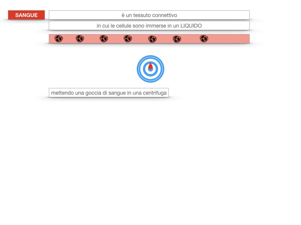 13. CIRCOLAZIONE E DIFESE_SIMULAZIONE.081