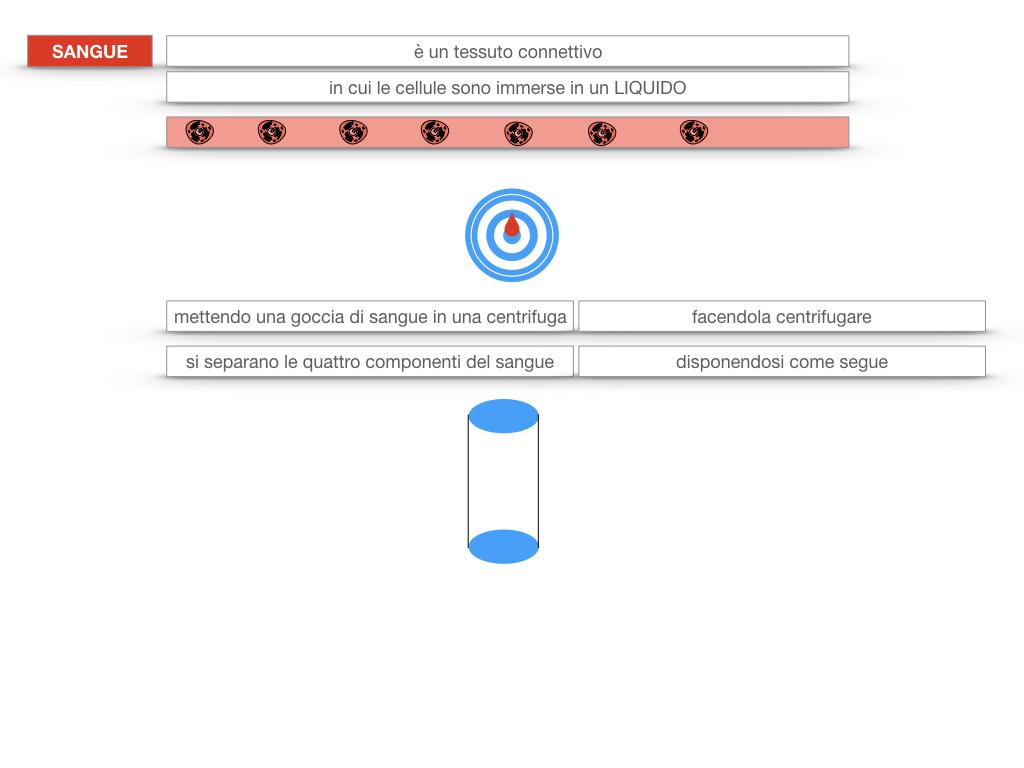 13. CIRCOLAZIONE E DIFESE_SIMULAZIONE.085