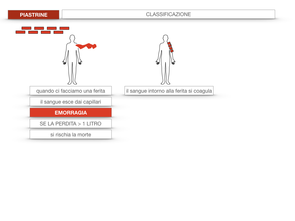 16. PIASTRINE CELLULE STAMINALI_SIMULAZIONE.010