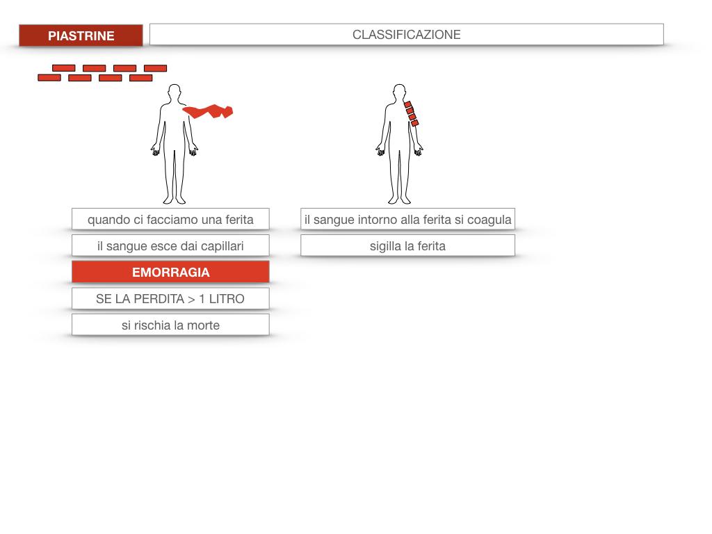 16. PIASTRINE CELLULE STAMINALI_SIMULAZIONE.011