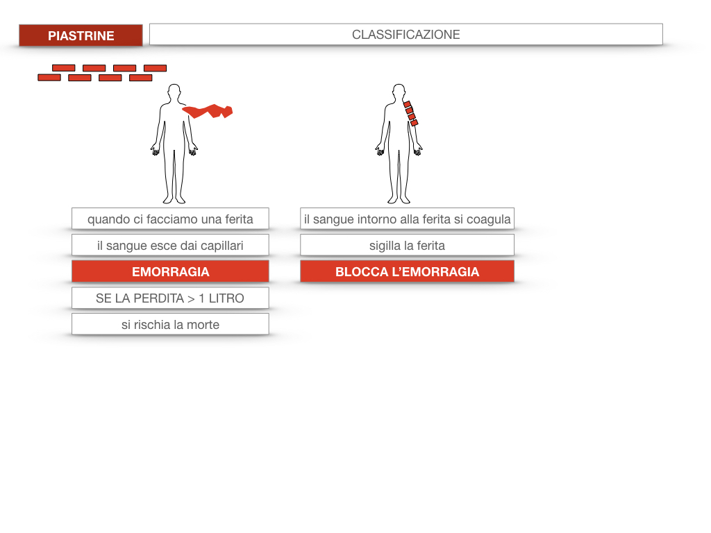 16. PIASTRINE CELLULE STAMINALI_SIMULAZIONE.012