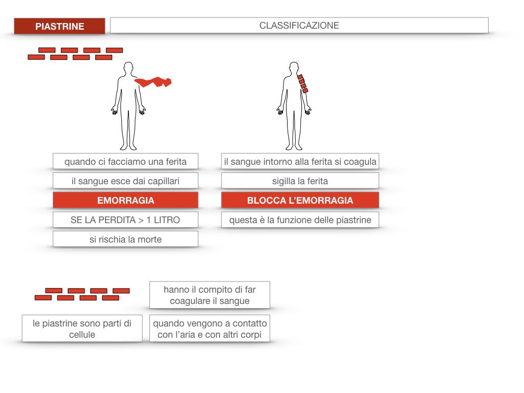 16. PIASTRINE CELLULE STAMINALI_SIMULAZIONE.016
