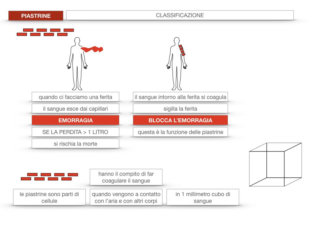 16. PIASTRINE CELLULE STAMINALI_SIMULAZIONE.017