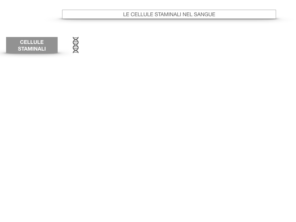 16. PIASTRINE CELLULE STAMINALI_SIMULAZIONE.045