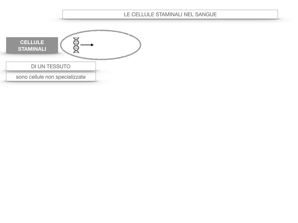 16. PIASTRINE CELLULE STAMINALI_SIMULAZIONE.047