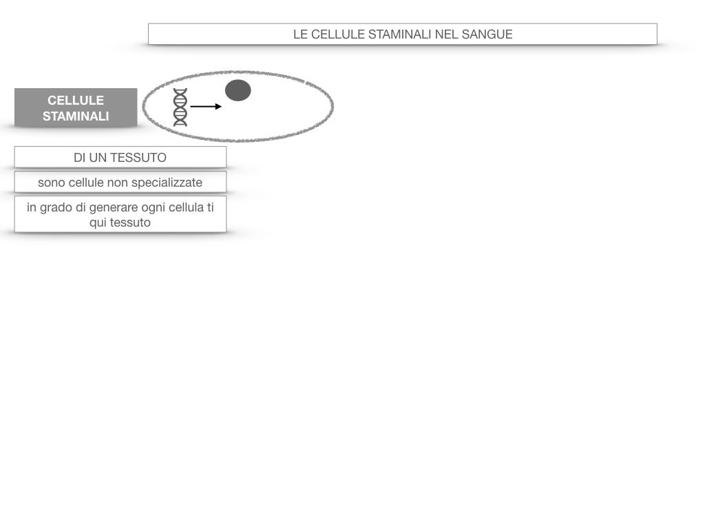 16. PIASTRINE CELLULE STAMINALI_SIMULAZIONE.048