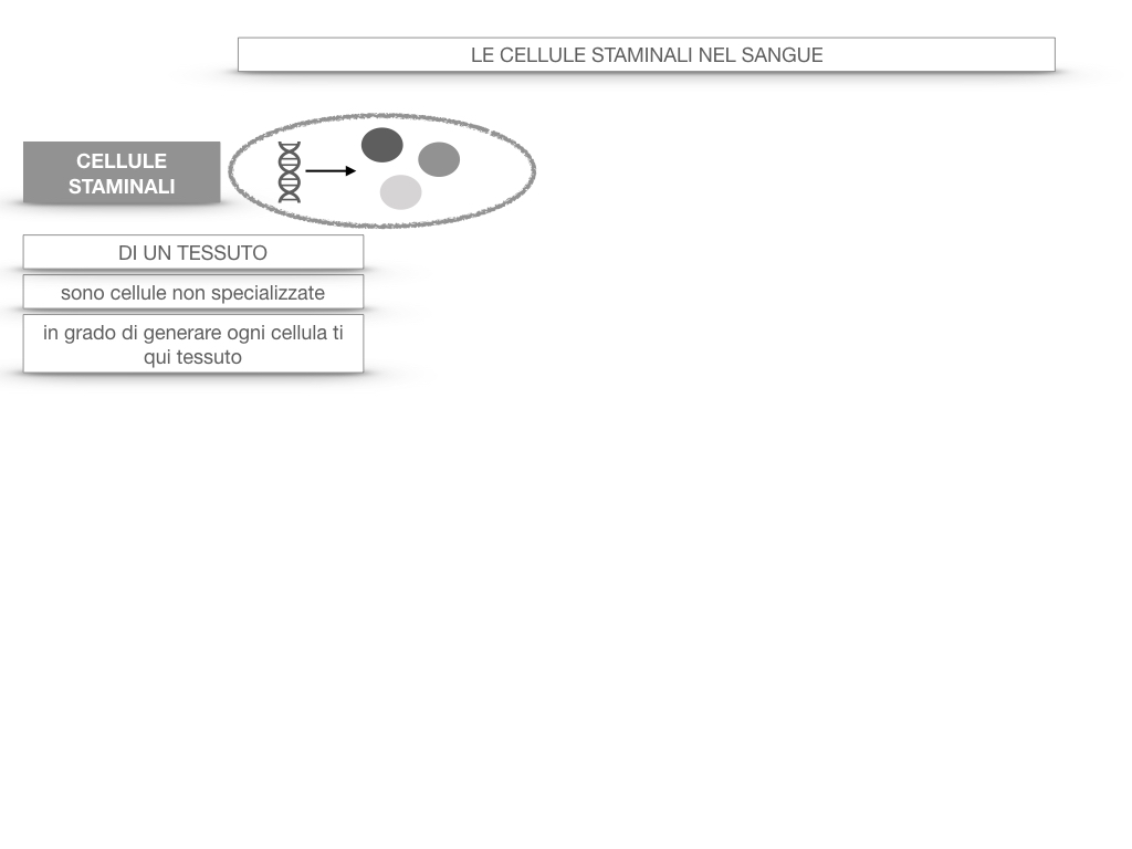 16. PIASTRINE CELLULE STAMINALI_SIMULAZIONE.050