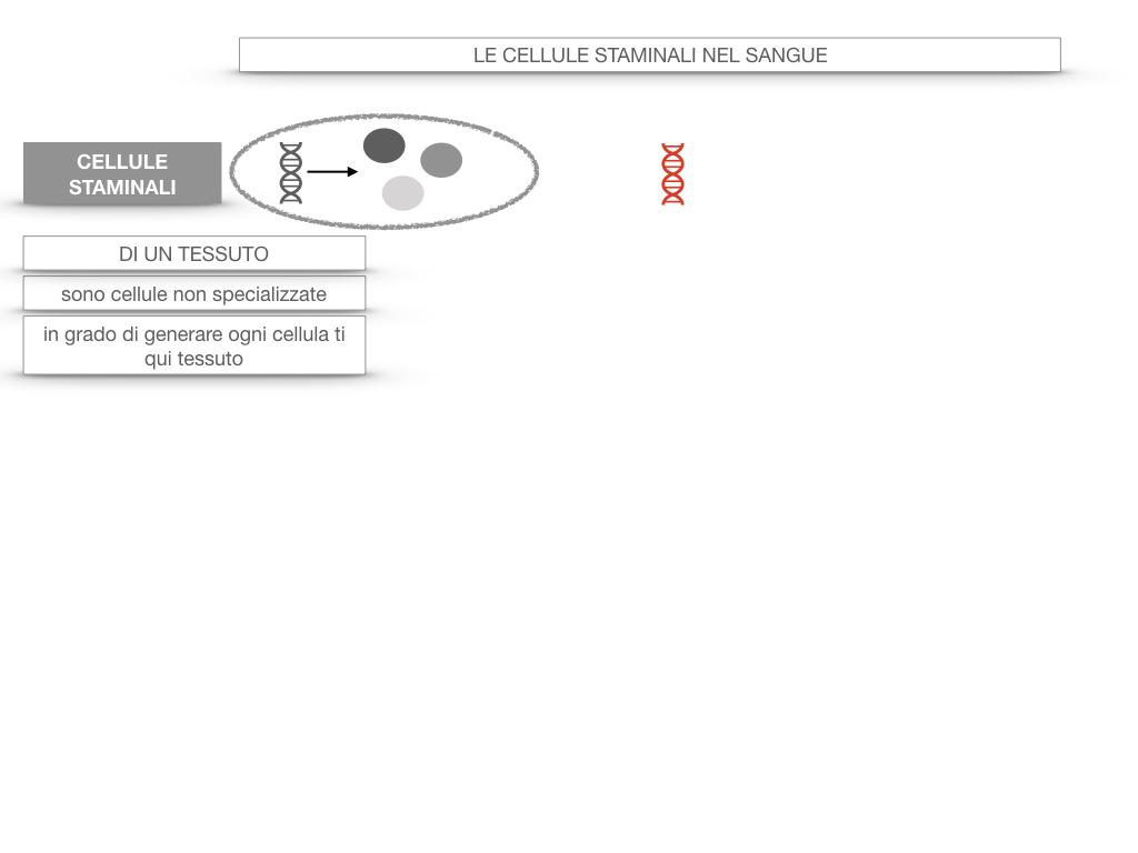 16. PIASTRINE CELLULE STAMINALI_SIMULAZIONE.051