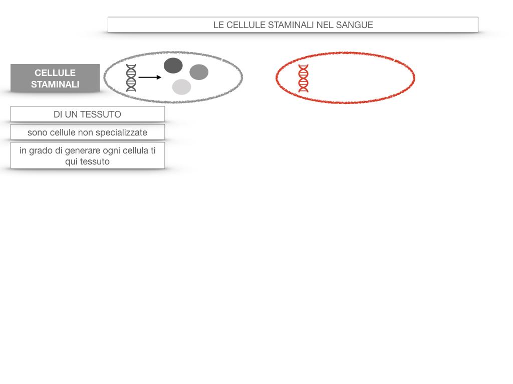 16. PIASTRINE CELLULE STAMINALI_SIMULAZIONE.052