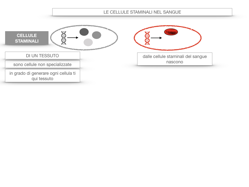 16. PIASTRINE CELLULE STAMINALI_SIMULAZIONE.053