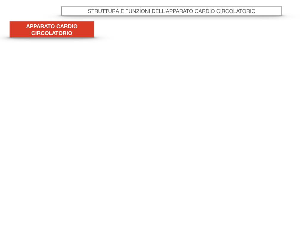 17. ORGANI APPARATO CIRCOLATORIO_SIMULAZIONE.003