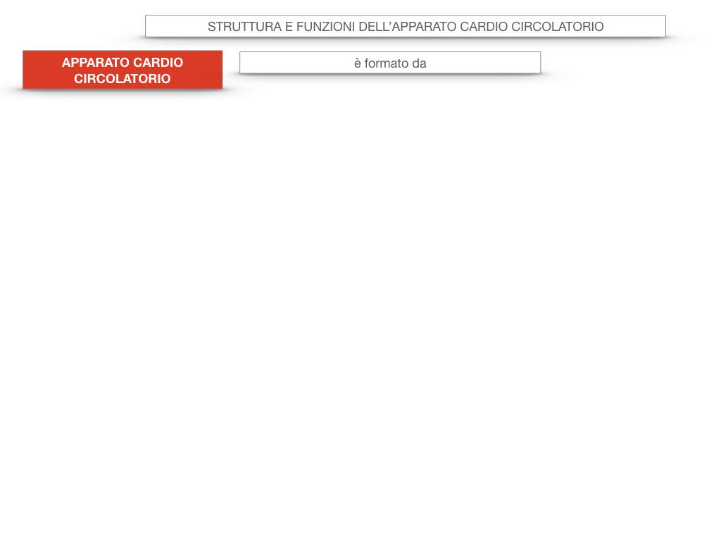 17. ORGANI APPARATO CIRCOLATORIO_SIMULAZIONE.004