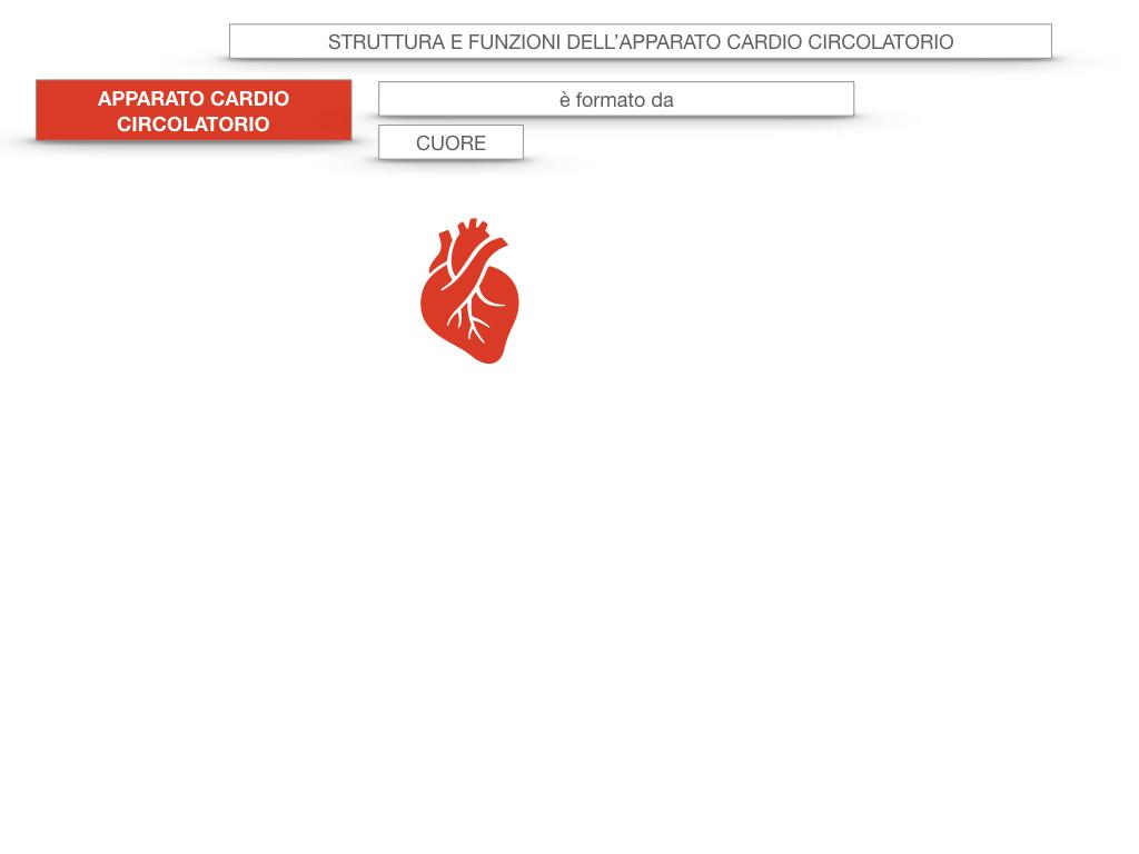 17. ORGANI APPARATO CIRCOLATORIO_SIMULAZIONE.005