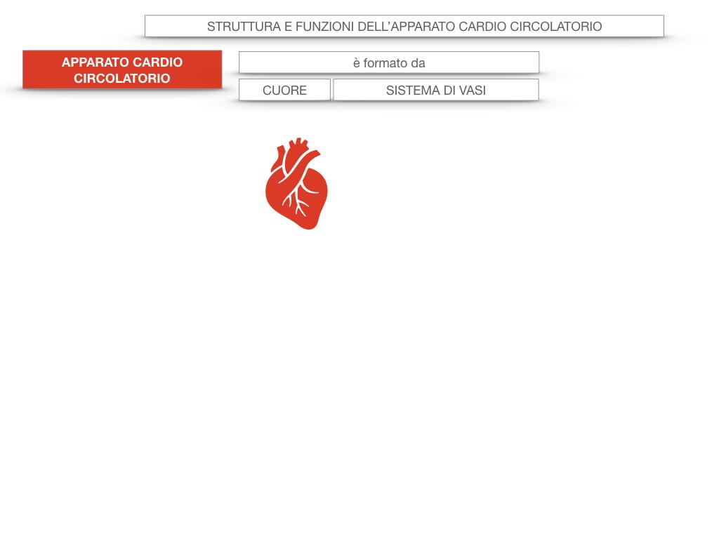 17. ORGANI APPARATO CIRCOLATORIO_SIMULAZIONE.006