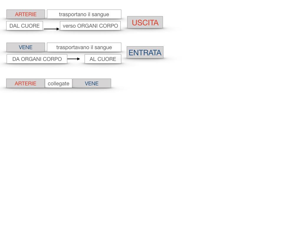 17. ORGANI APPARATO CIRCOLATORIO_SIMULAZIONE.093