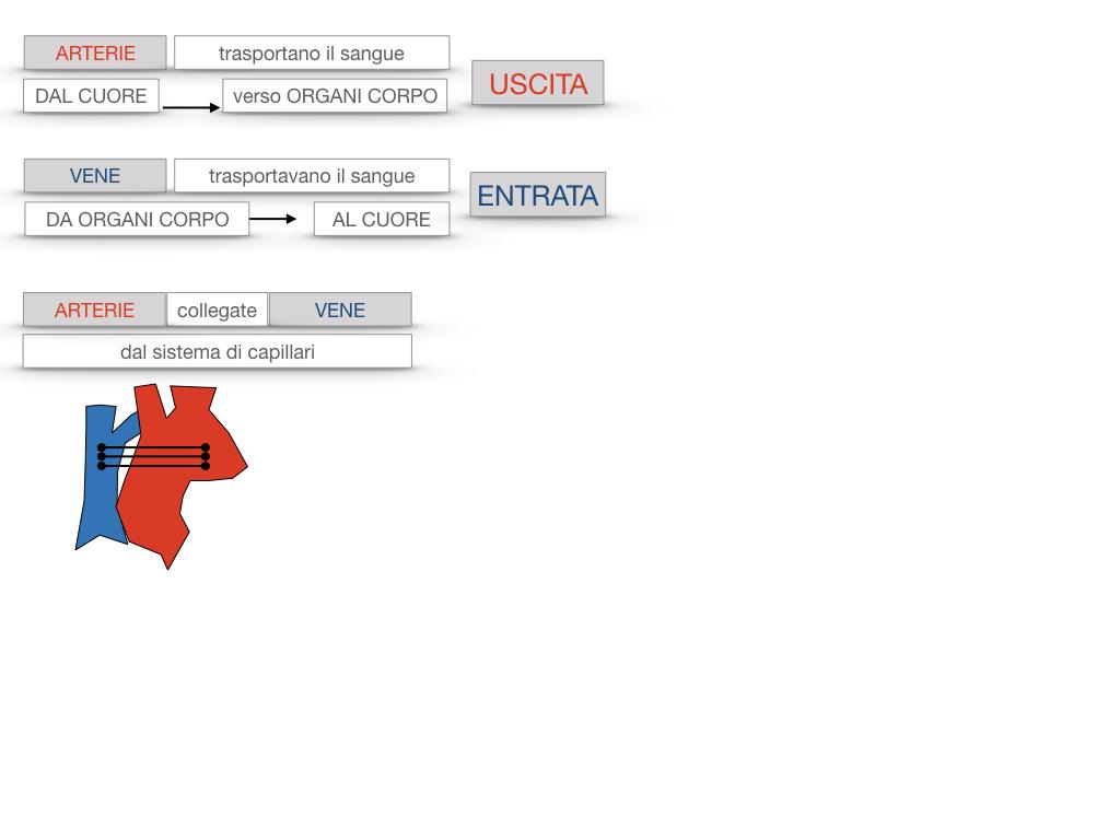 17. ORGANI APPARATO CIRCOLATORIO_SIMULAZIONE.094