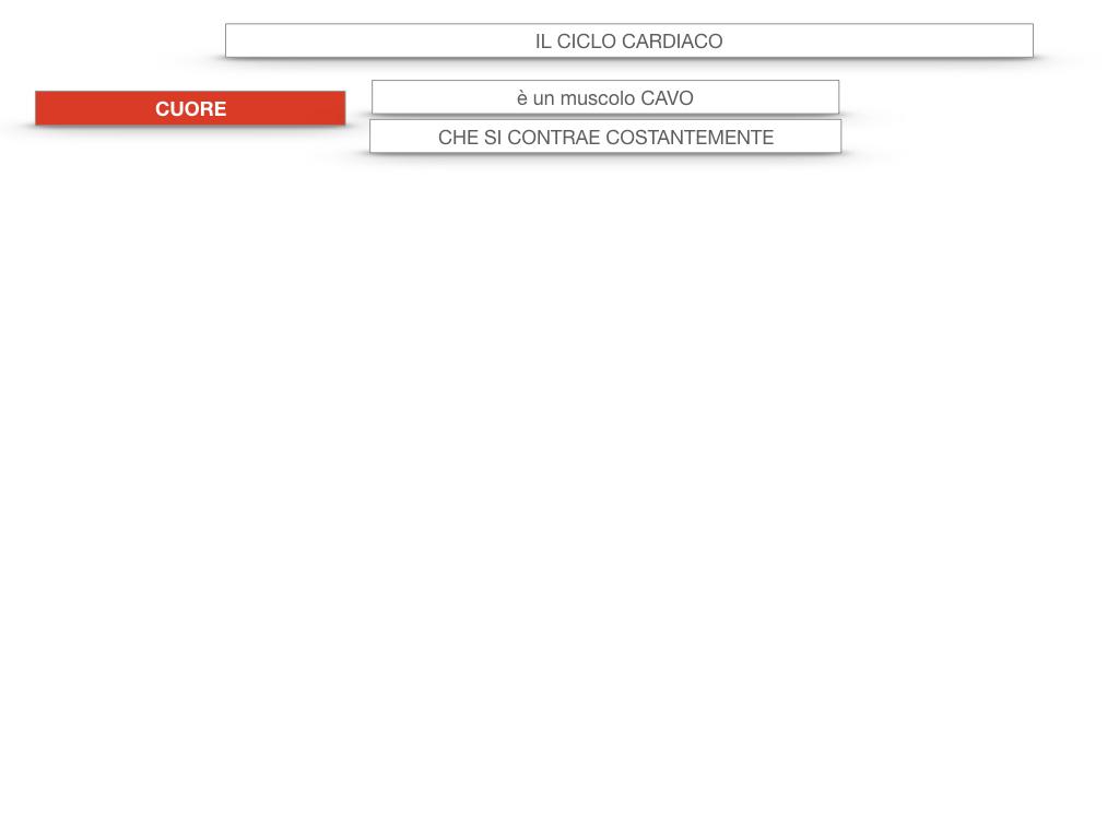 18. CICLO CARDIACO_SIMULAZIONE.005