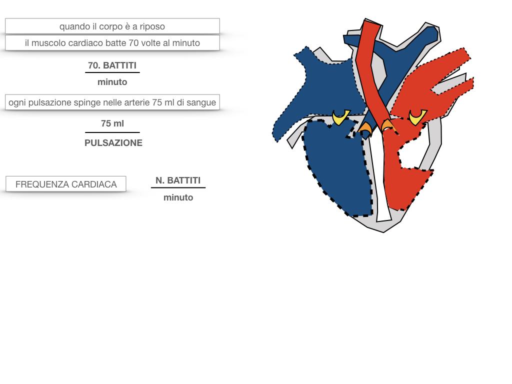 18. CICLO CARDIACO_SIMULAZIONE.050