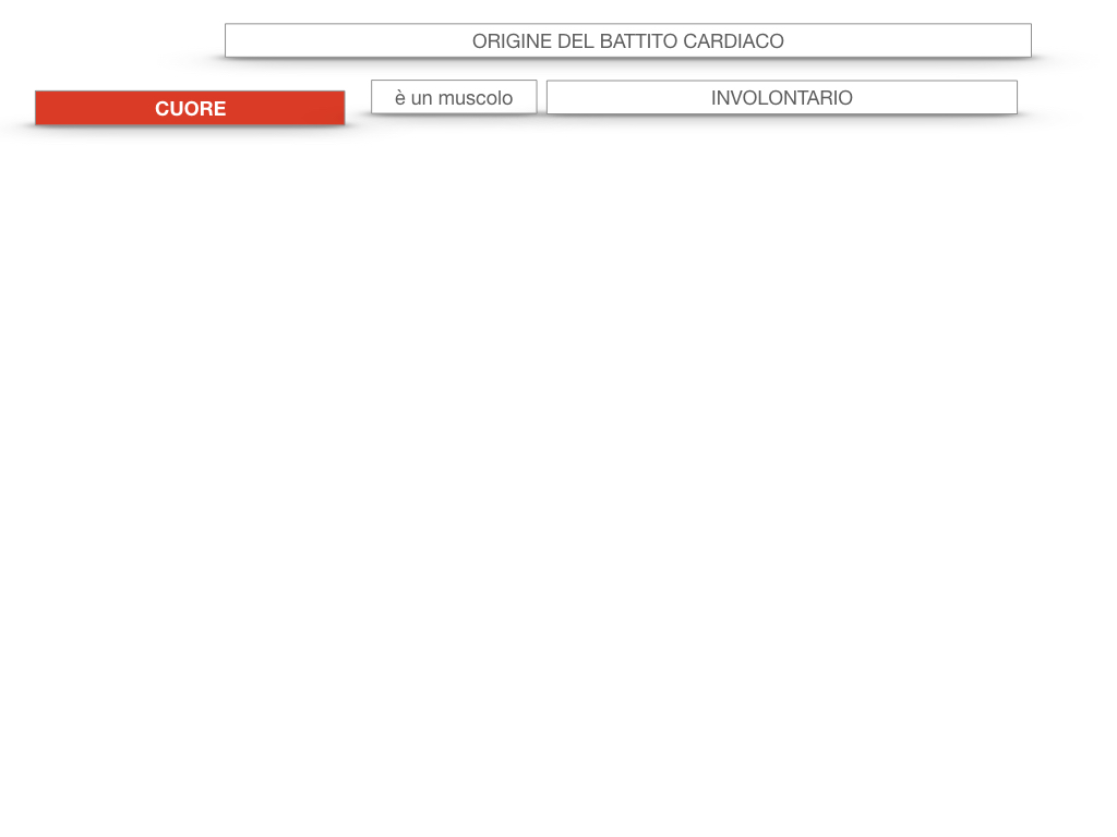 19. ORIGINE DEL BATTITO E INFARTO_SIMULAZIONE.003