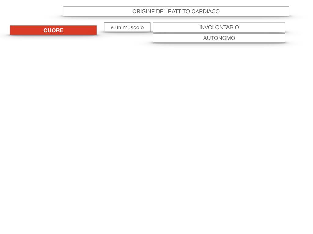 19. ORIGINE DEL BATTITO E INFARTO_SIMULAZIONE.004