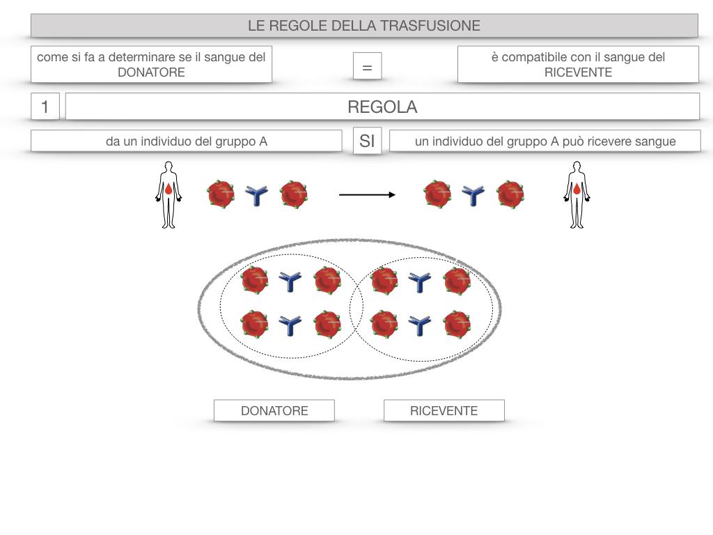22. LE REGOLE DELLA TRASFUSIONE_SIMULAZIONE.012