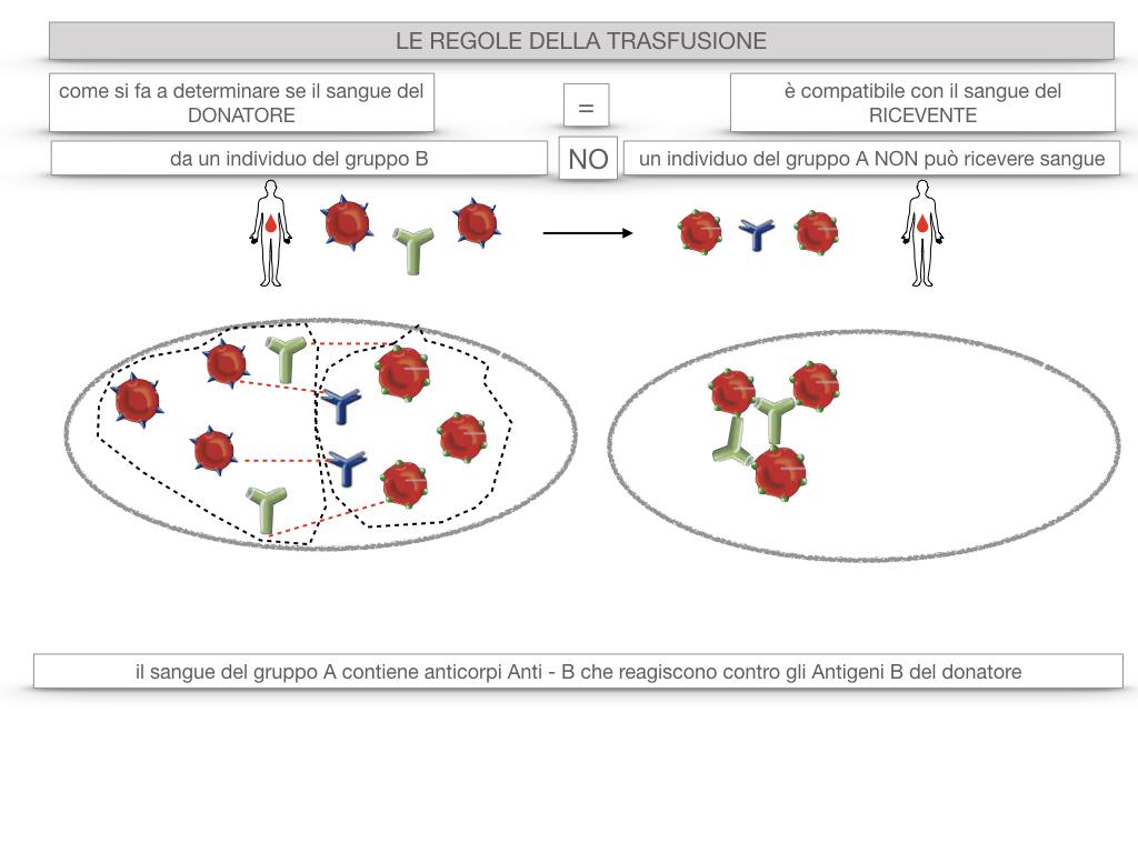 22. LE REGOLE DELLA TRASFUSIONE_SIMULAZIONE.024