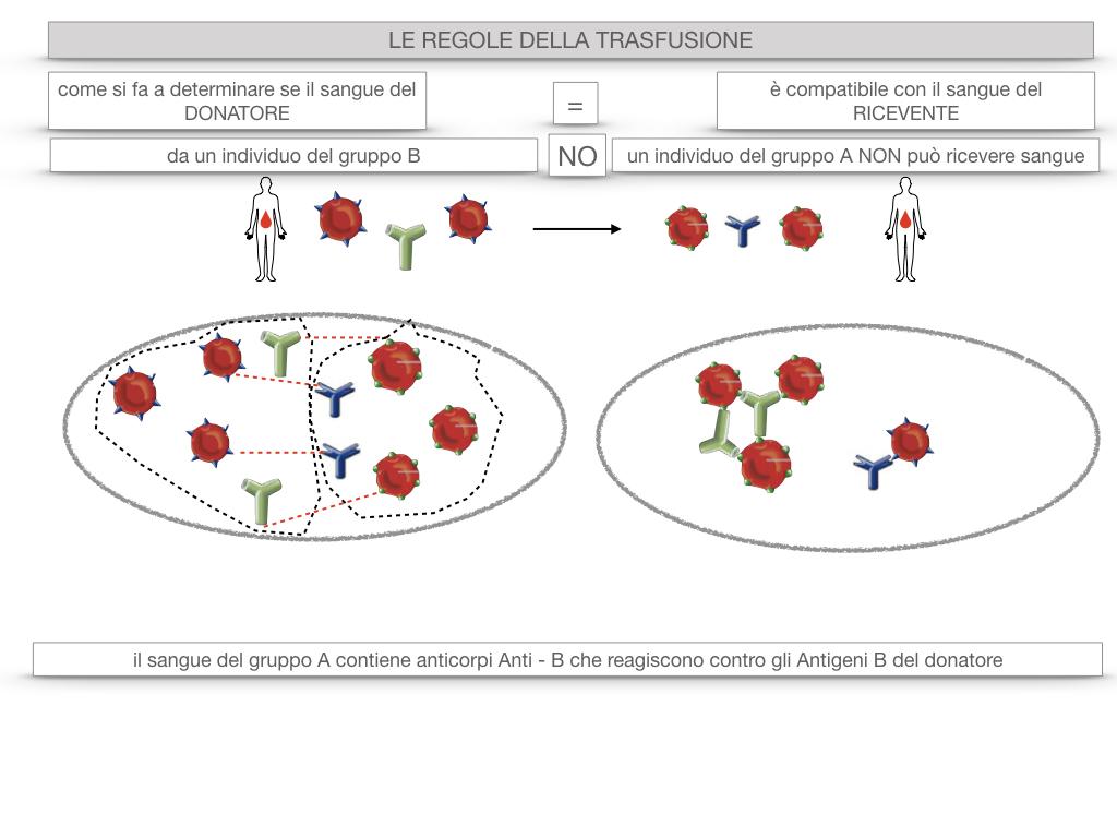 22. LE REGOLE DELLA TRASFUSIONE_SIMULAZIONE.025