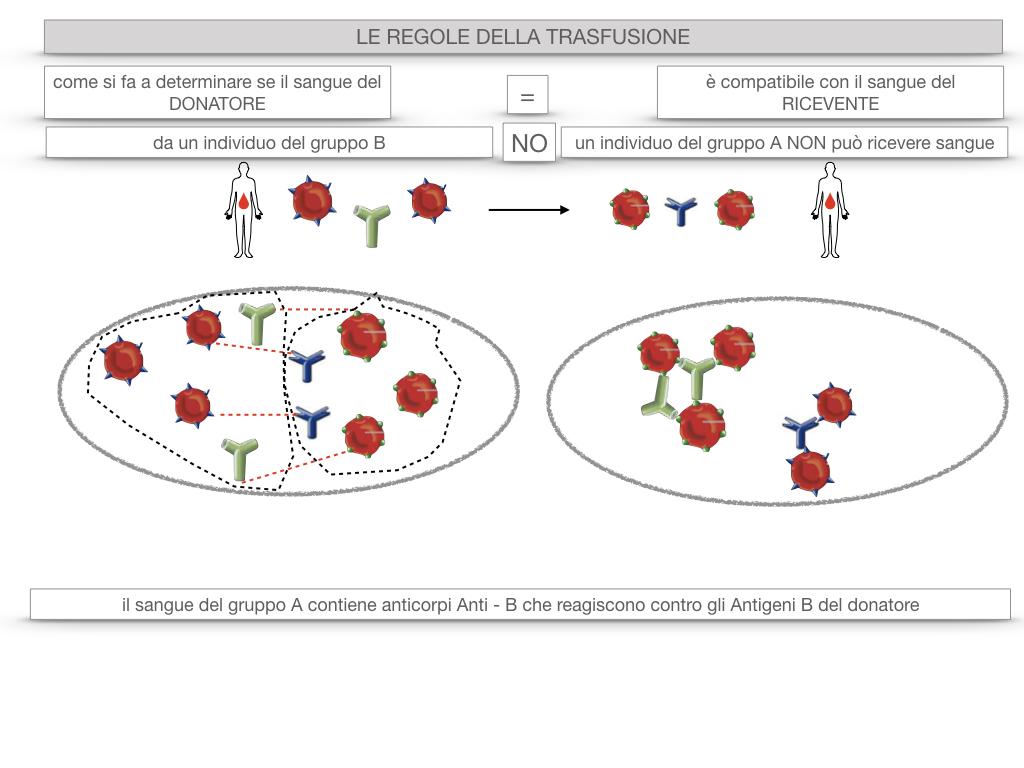 22. LE REGOLE DELLA TRASFUSIONE_SIMULAZIONE.026