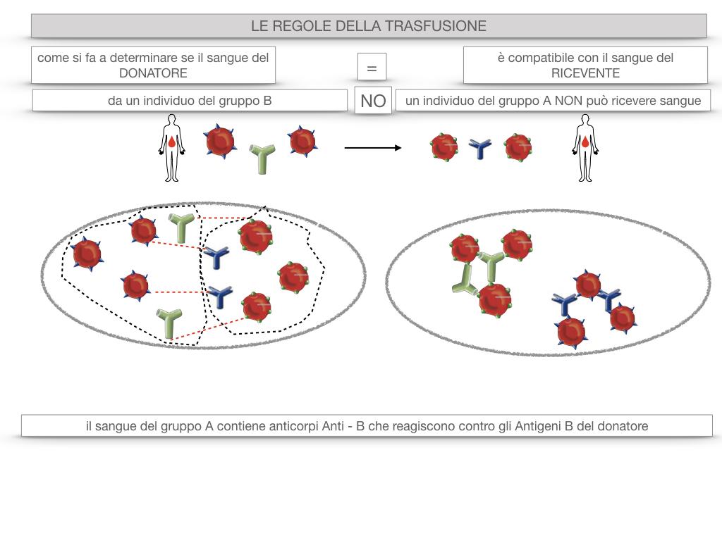 22. LE REGOLE DELLA TRASFUSIONE_SIMULAZIONE.027