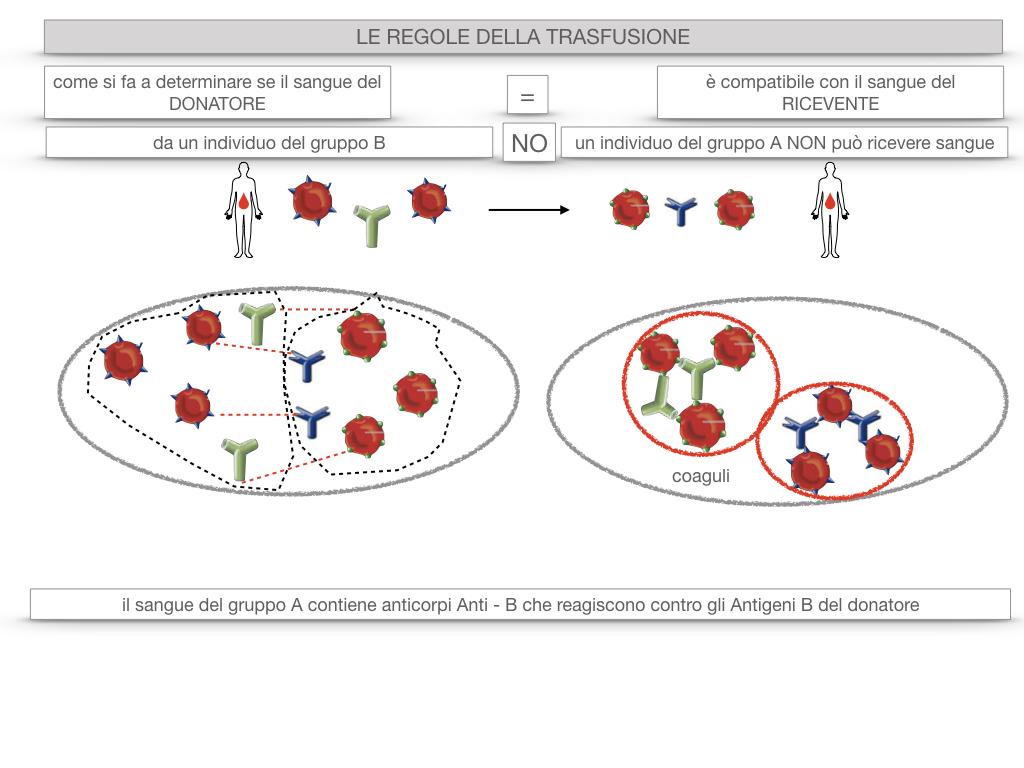 22. LE REGOLE DELLA TRASFUSIONE_SIMULAZIONE.028