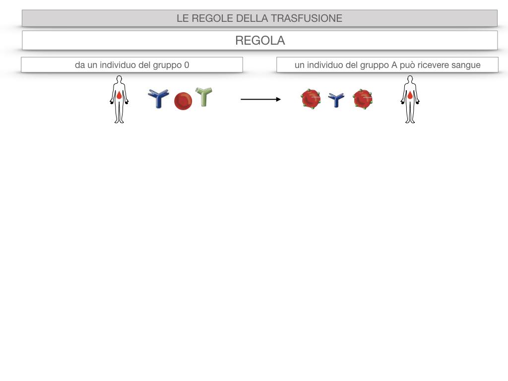22. LE REGOLE DELLA TRASFUSIONE_SIMULAZIONE.033