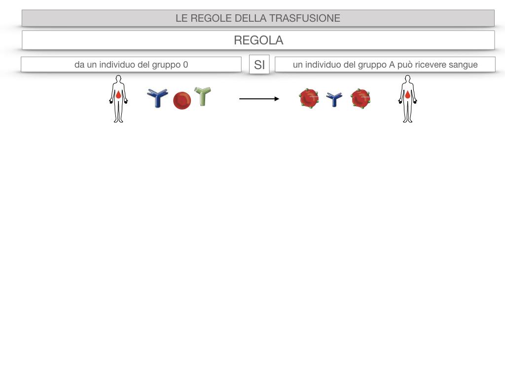 22. LE REGOLE DELLA TRASFUSIONE_SIMULAZIONE.034