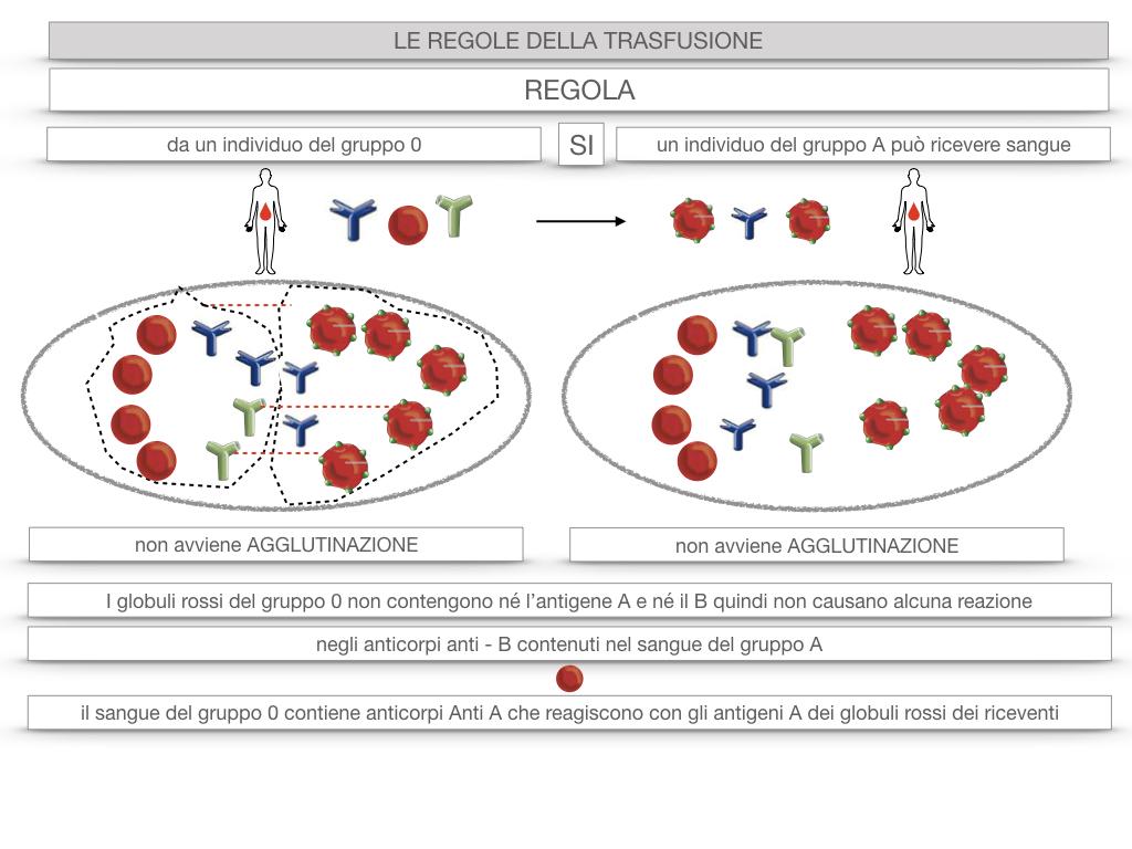 22. LE REGOLE DELLA TRASFUSIONE_SIMULAZIONE.041