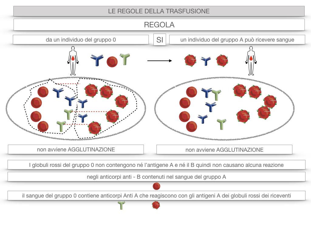 22. LE REGOLE DELLA TRASFUSIONE_SIMULAZIONE.043