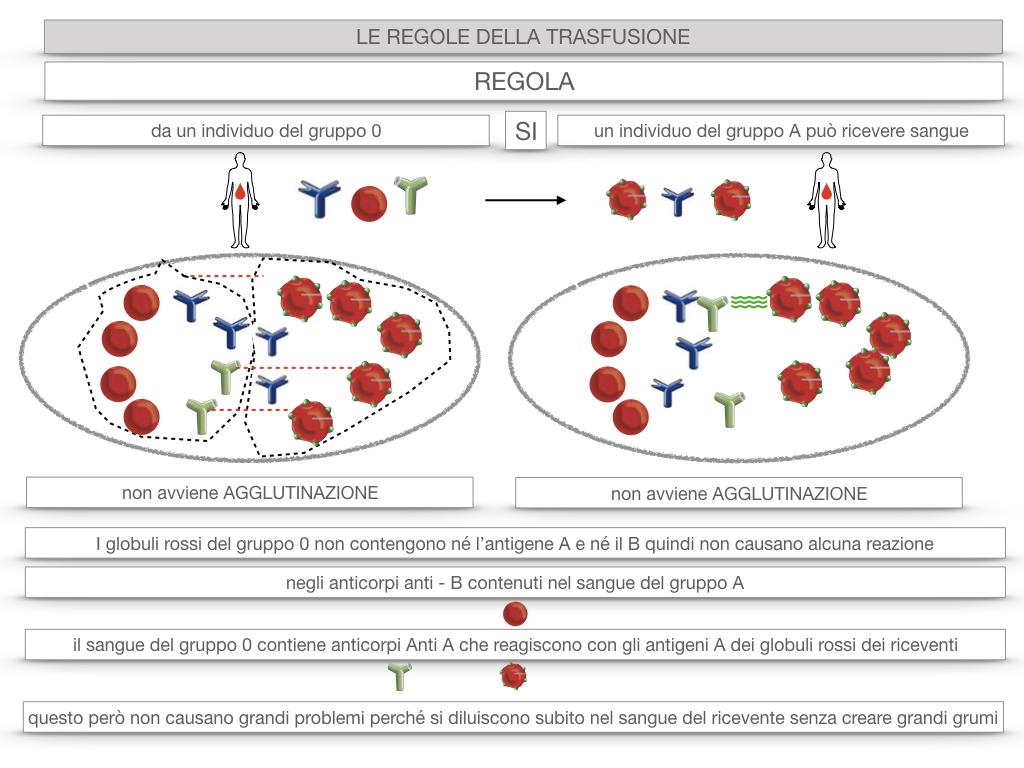 22. LE REGOLE DELLA TRASFUSIONE_SIMULAZIONE.044
