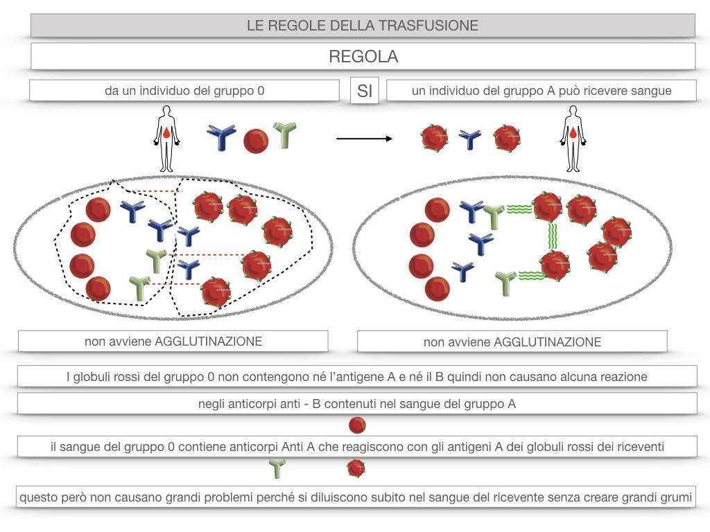 22. LE REGOLE DELLA TRASFUSIONE_SIMULAZIONE.046