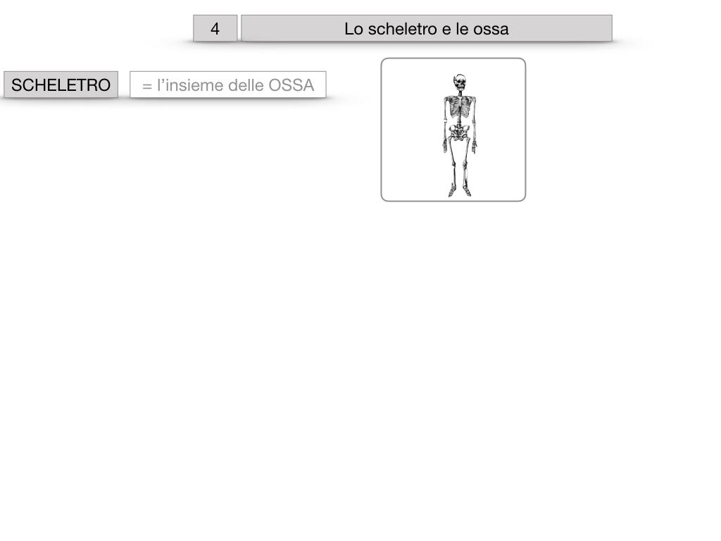 4. SCIENZE_LO SCHELETRO E LE OSSA_SIMULAZIONE.003