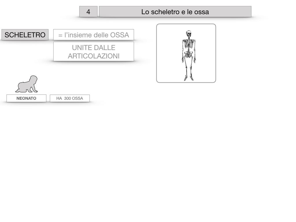4. SCIENZE_LO SCHELETRO E LE OSSA_SIMULAZIONE.006