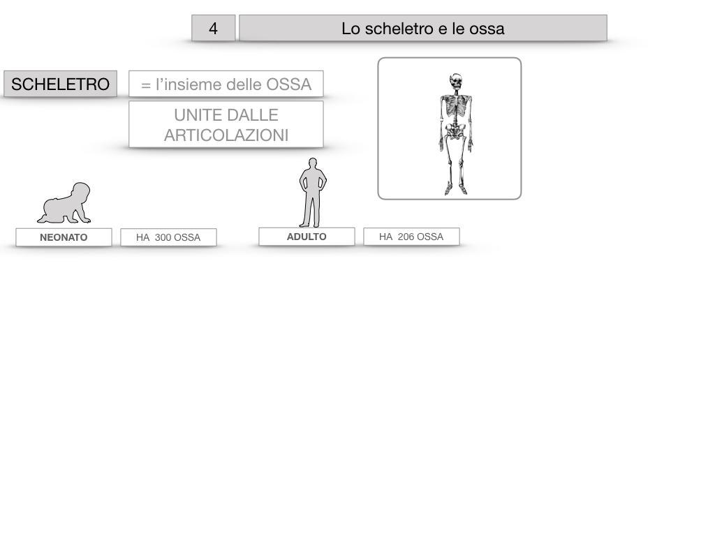 4. SCIENZE_LO SCHELETRO E LE OSSA_SIMULAZIONE.007