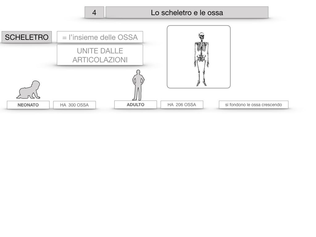 4. SCIENZE_LO SCHELETRO E LE OSSA_SIMULAZIONE.008