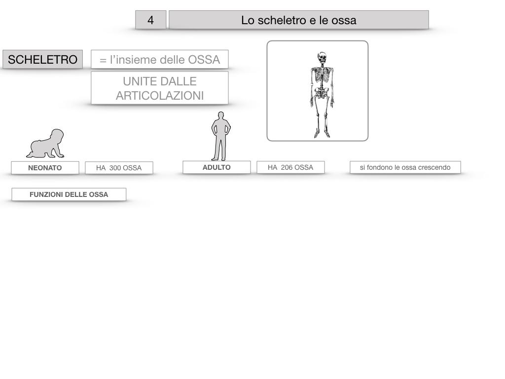 4. SCIENZE_LO SCHELETRO E LE OSSA_SIMULAZIONE.009