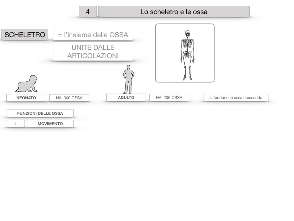 4. SCIENZE_LO SCHELETRO E LE OSSA_SIMULAZIONE.010