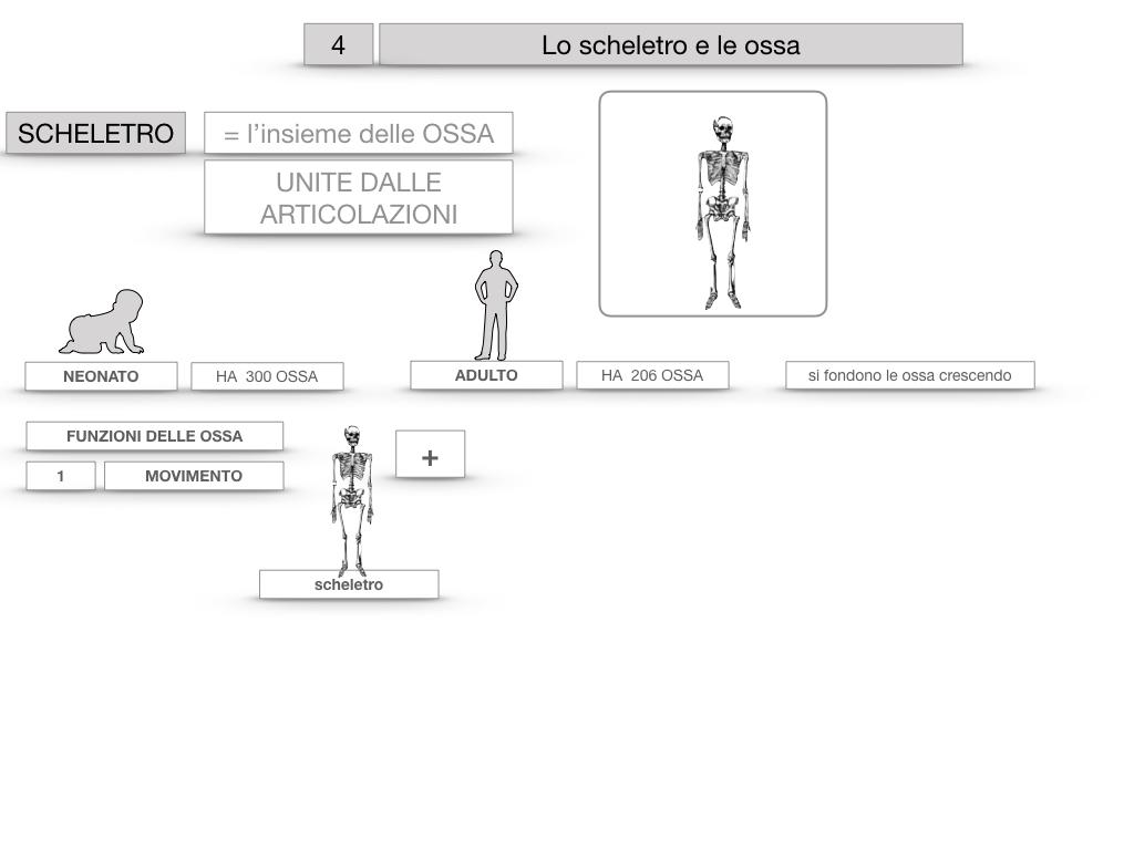 4. SCIENZE_LO SCHELETRO E LE OSSA_SIMULAZIONE.011