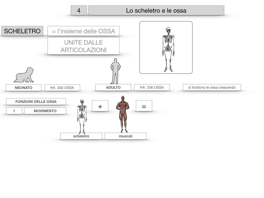 4. SCIENZE_LO SCHELETRO E LE OSSA_SIMULAZIONE.012