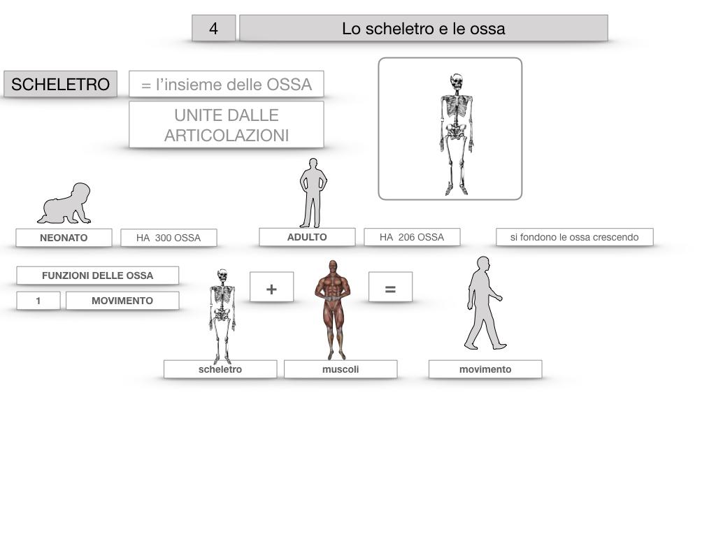 4. SCIENZE_LO SCHELETRO E LE OSSA_SIMULAZIONE.013